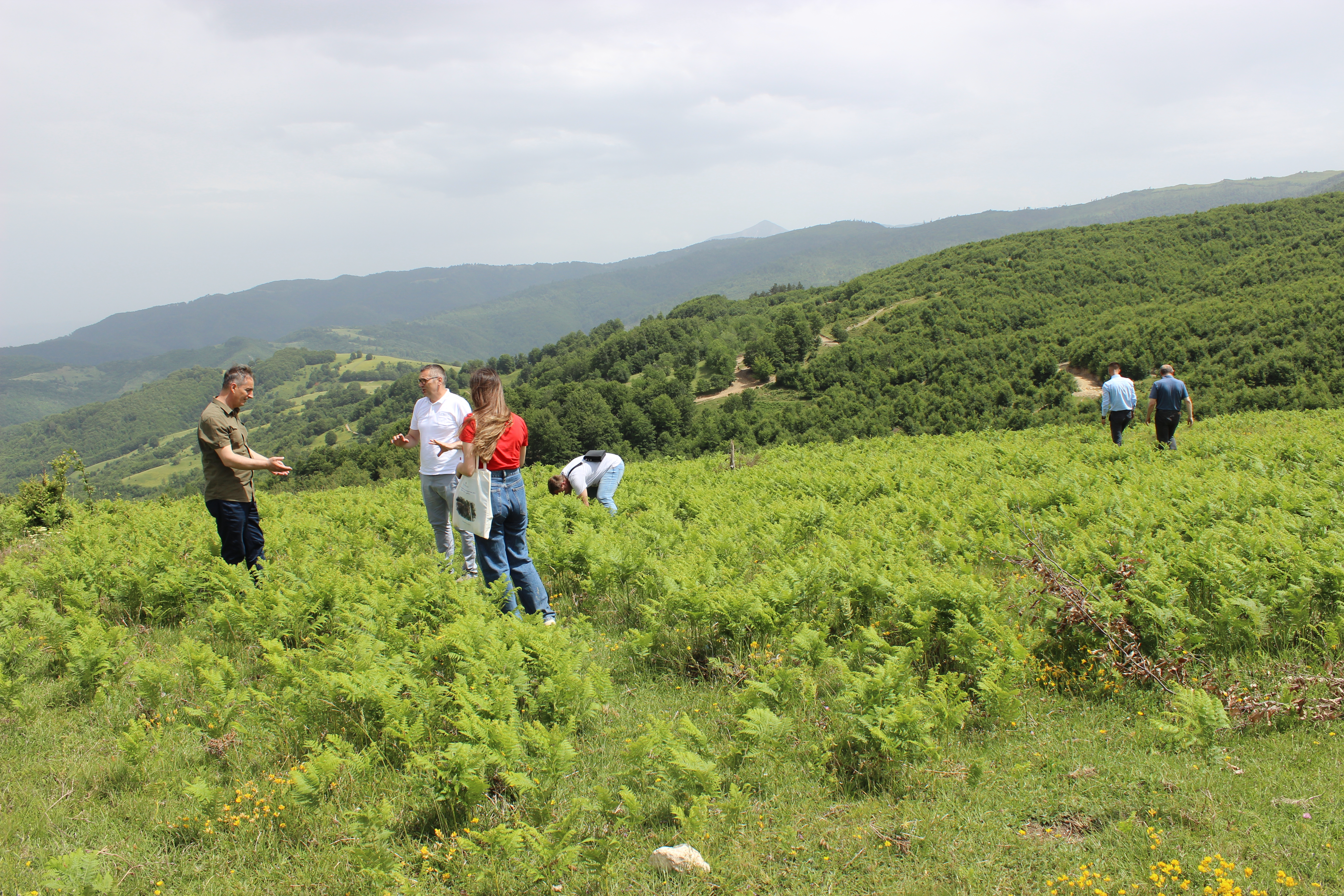Kosovo Discusses the Next Ten-Year Strategy on Forestry Sector
